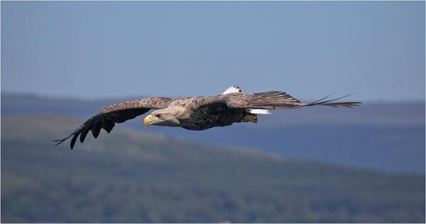 Eagle Eyed by mjparmy