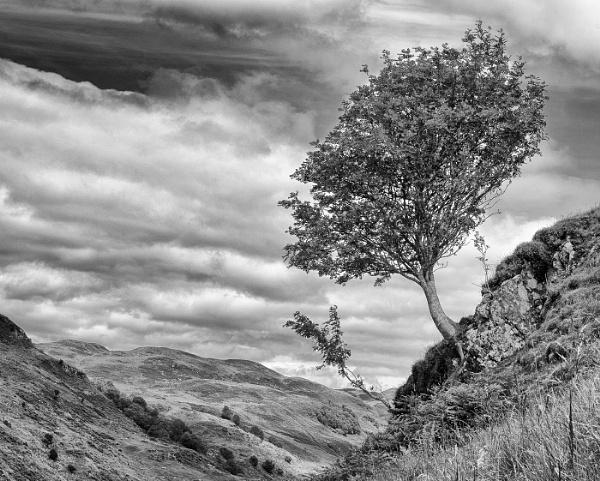 Tree Glen Lonan by ww2spitfire