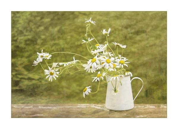 Garden Flowers by Irishkate