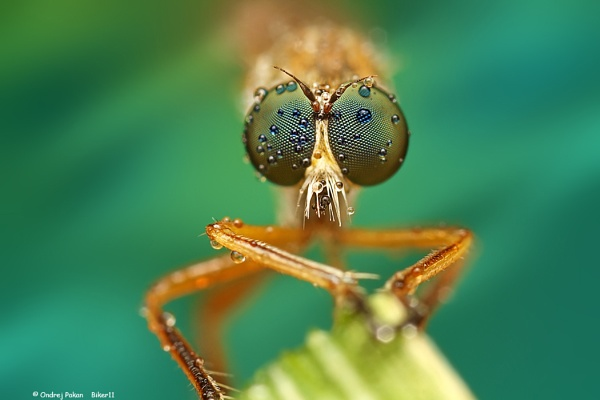 Green eyes by biker11