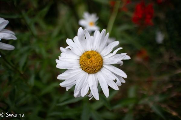 Floral II ... by Swarnadip