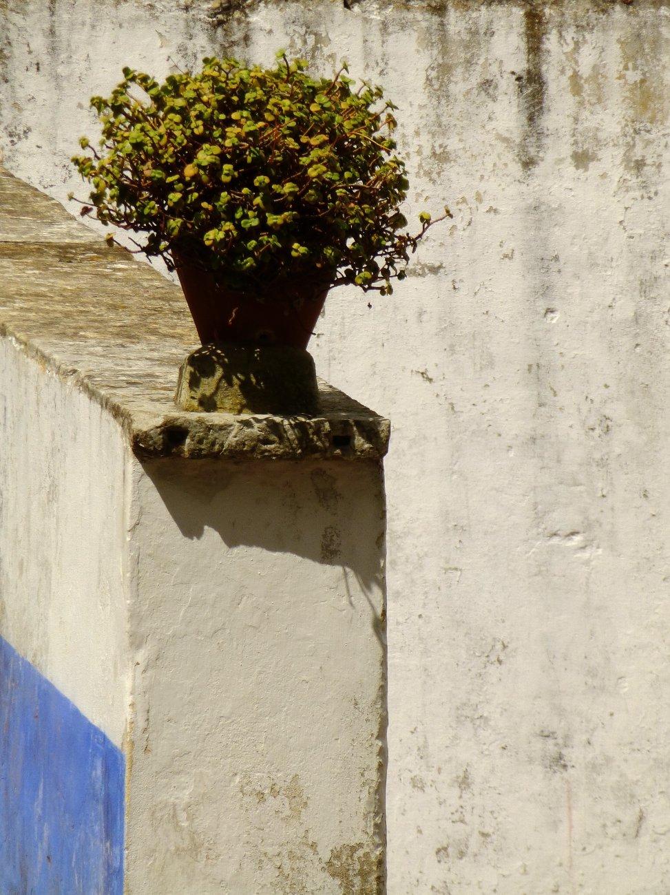 Planta Precarium