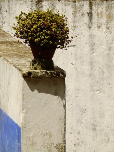 Planta Precarium by ardbeg77