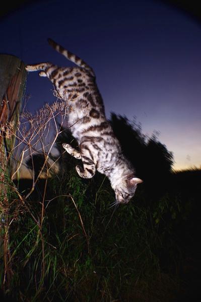 The night hunter by turniptowers