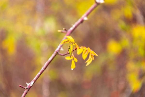 Green autumn leaves by rninov