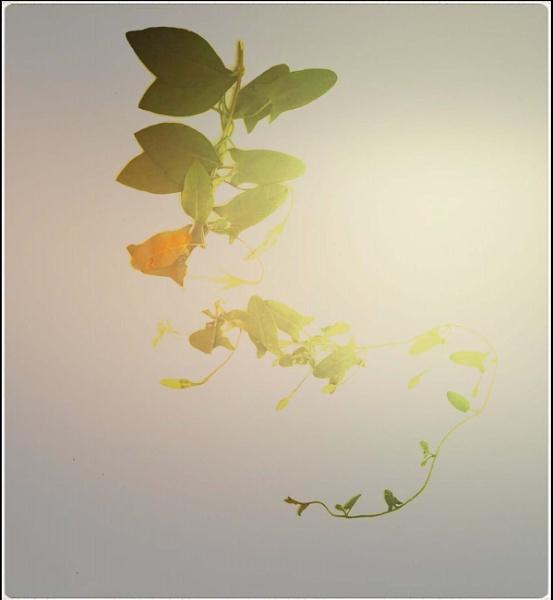 flor de luz by lostrita
