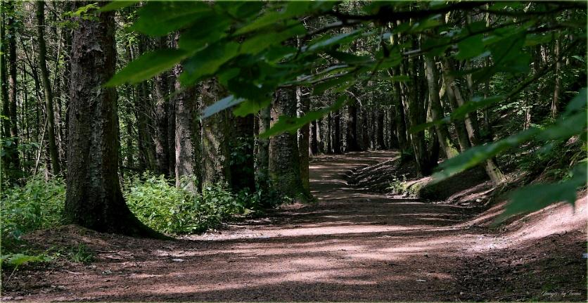 Woodland Walk Atop The Avon Water Gorge.