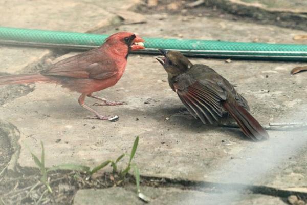 Feeding time by Dackj