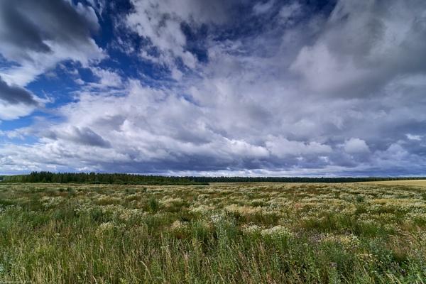 Chamomile field by LotaLota