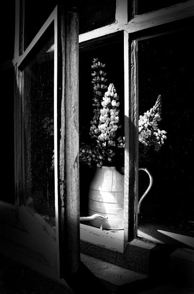 In a Dirty Window by adagio