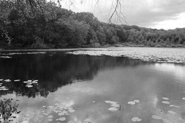 "~ \""Orlando Pond II\"" by LexEquine"