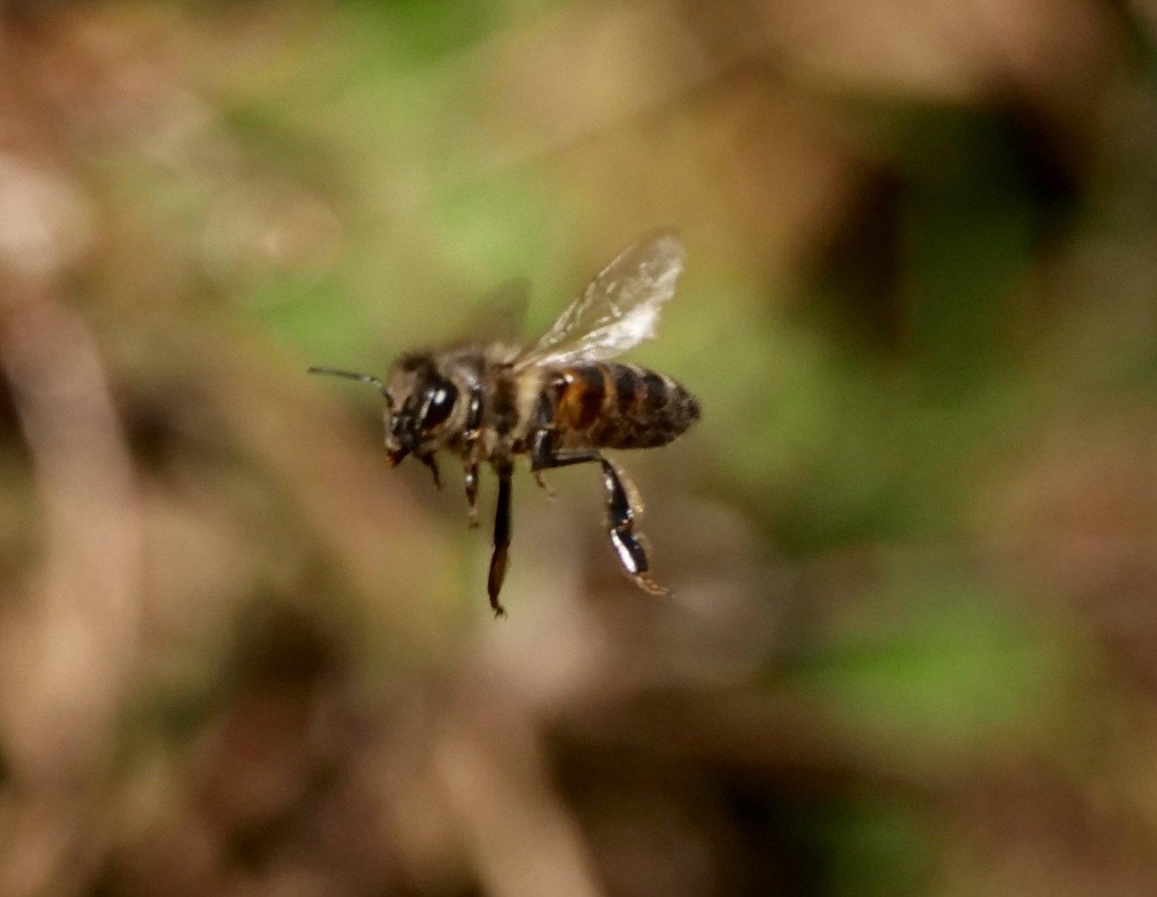 bee inflight