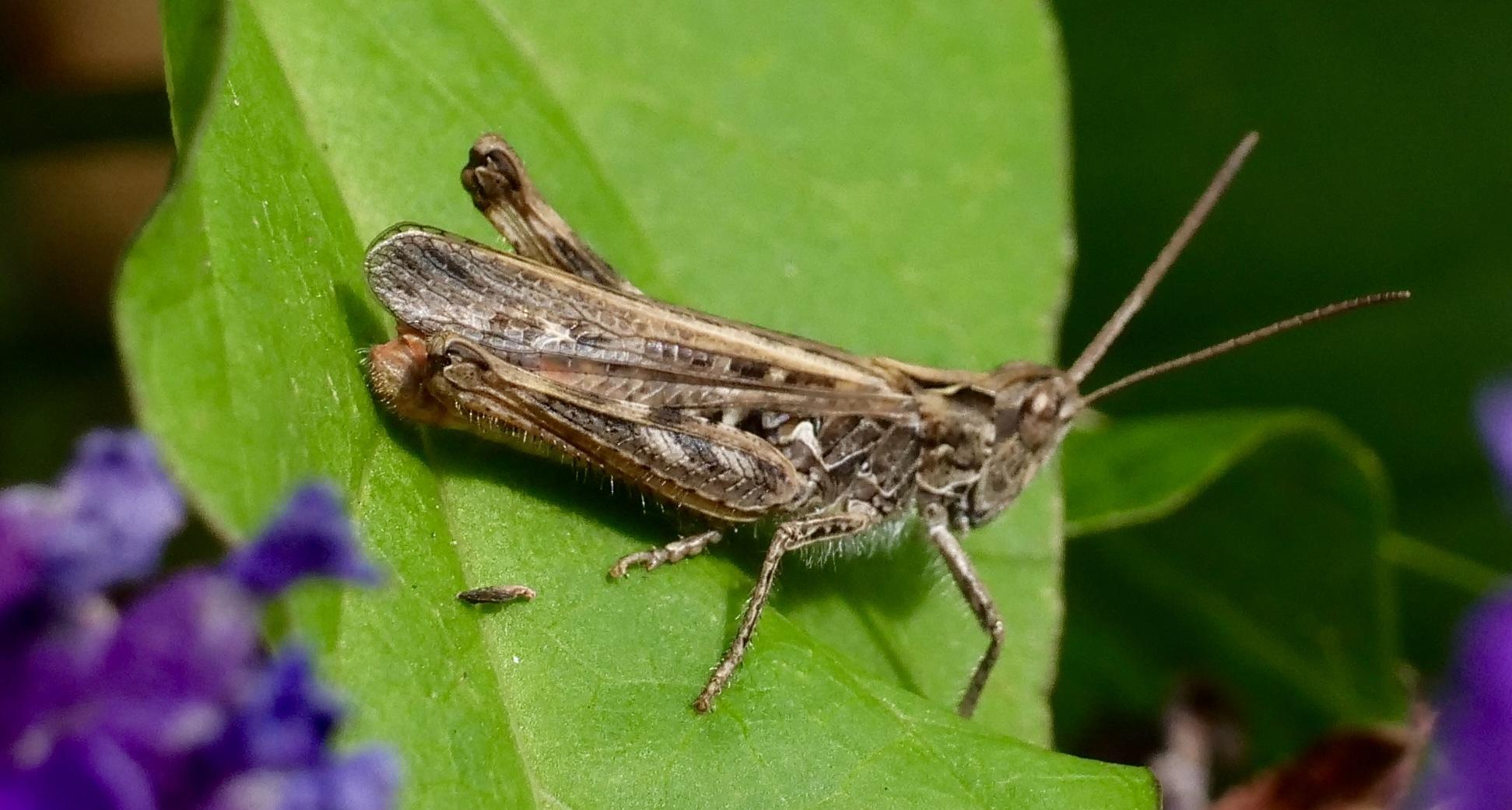 aghhh Grasshopper