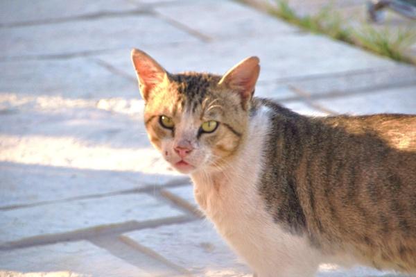 Greek Cats... by Chinga