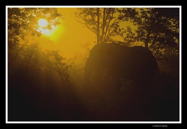 Sunset majesty by fatfranksfolley