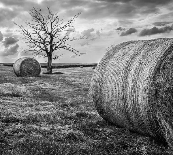 Dead Tree by mbradley