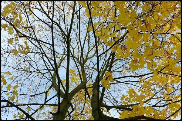the yellow tree by FabioKeiner