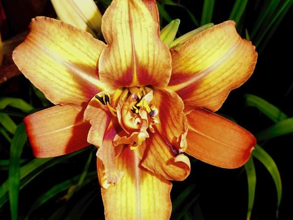 iris by colin2019
