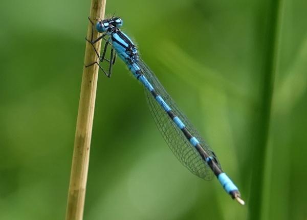 Blue beauty by frogs123