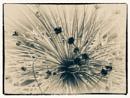 Experimental 1 by Monochrome2004
