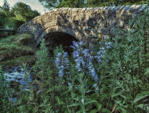 Blue flowers by BillRookery