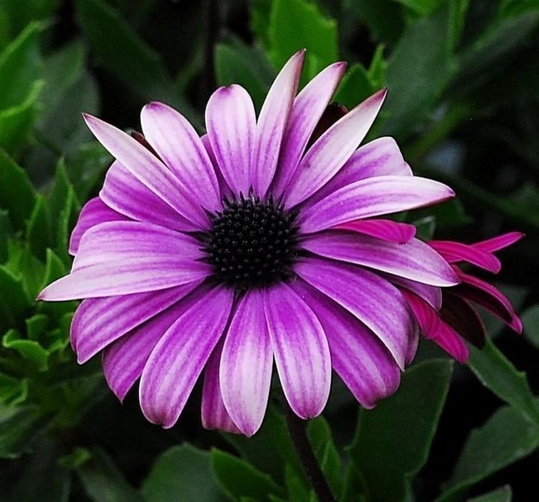 Pleasantly Pleasing Purple Flower.