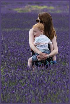 Cuddles in the Lavender Fields