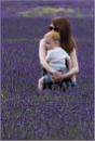 Cuddles in the Lavender Fields by AlfieK