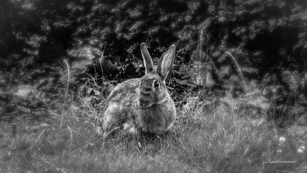 Woodland Hare by SuziQ67