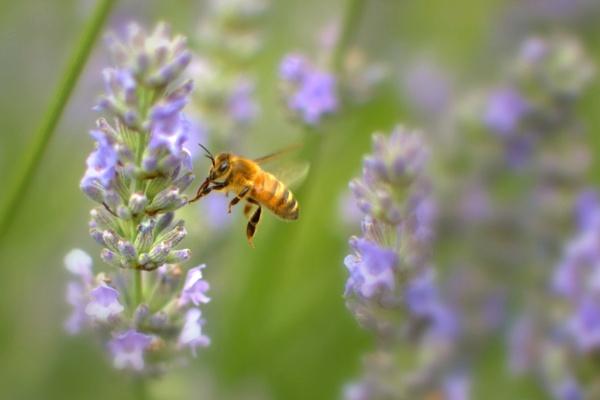 Pollenator by rawshooter