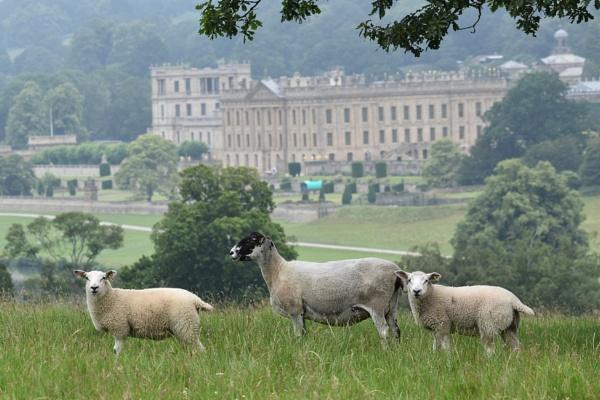 Sheep at Chatsworth by ChrisB73