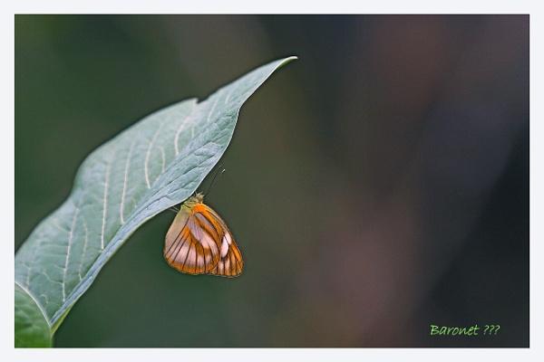 Baronet ??? by prabhusinha