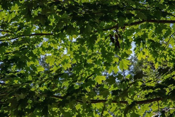Summer Leaves by Merlin_k
