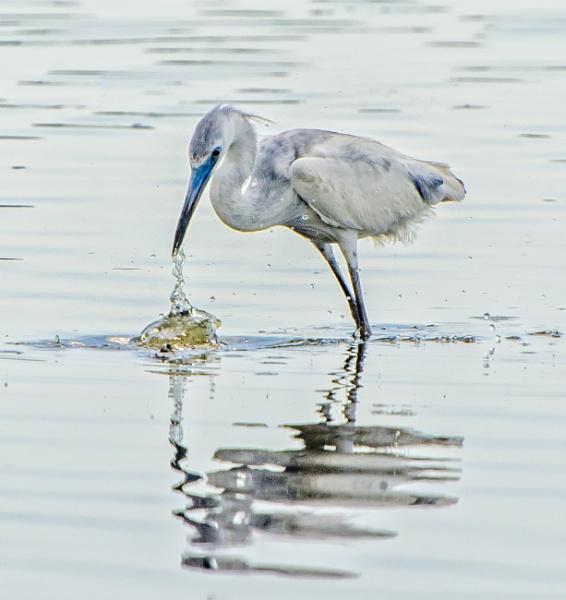 Spearing fish in Myakka Lake by jbsaladino