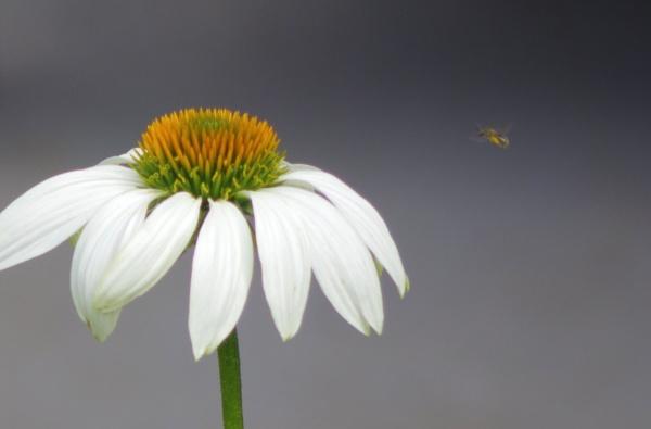 The Bee Line by Friendlyguy