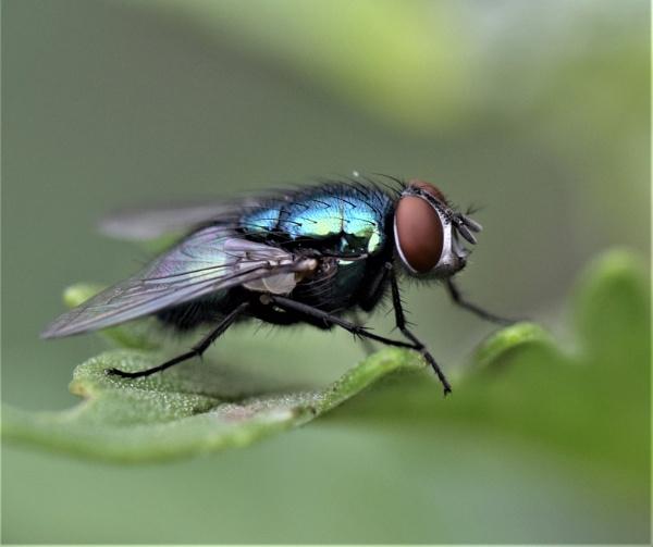 Bluish Green. by macromal