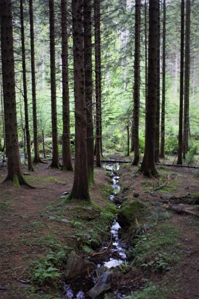 Woodland views by gunner44