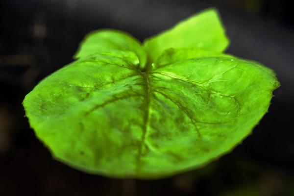 Lines on a leaf by Madoldie