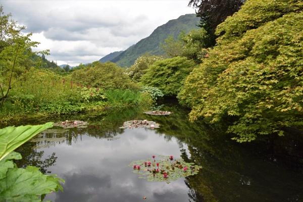 The Pond by davyskid