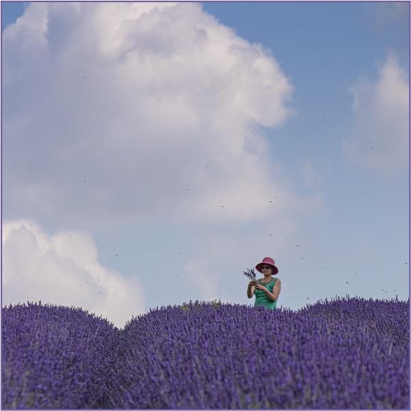 Gathering Lavender by AlfieK