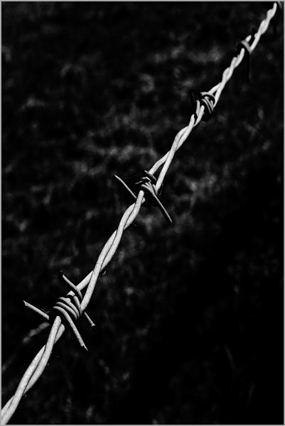 Barbed Diagonal by AlfieK