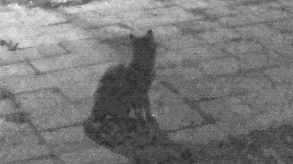 Black cat in the night by SauliusR