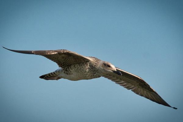 flight patrol by ss_silvius