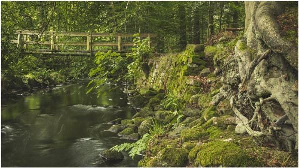 Woodland Bridge by JelFish