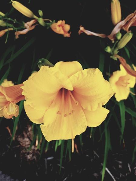 Flowers in a garden by Bar1826