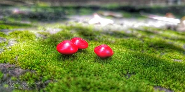 Precious stones by ragsa220