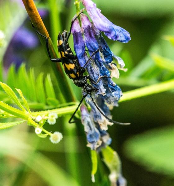 bug by madbob