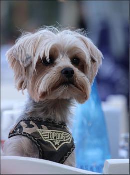 Top Dog In Afitos.