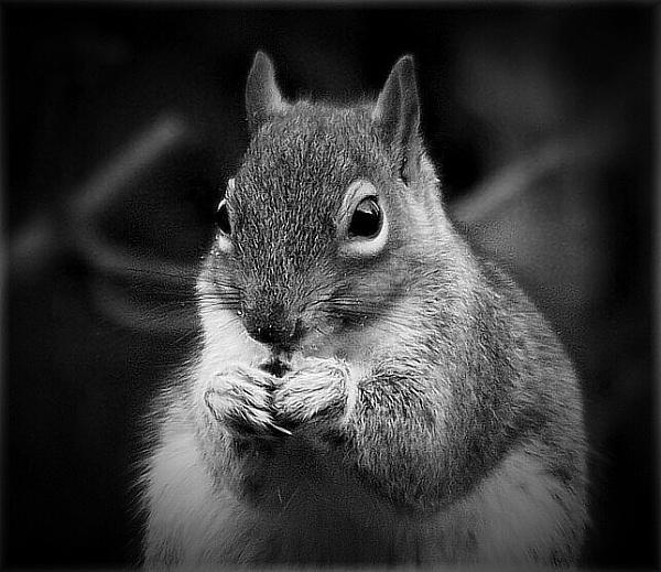 Mono squirrel by HobbitDave