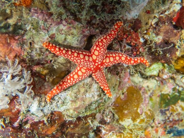 Thorny Sea Star by WorldInFocus